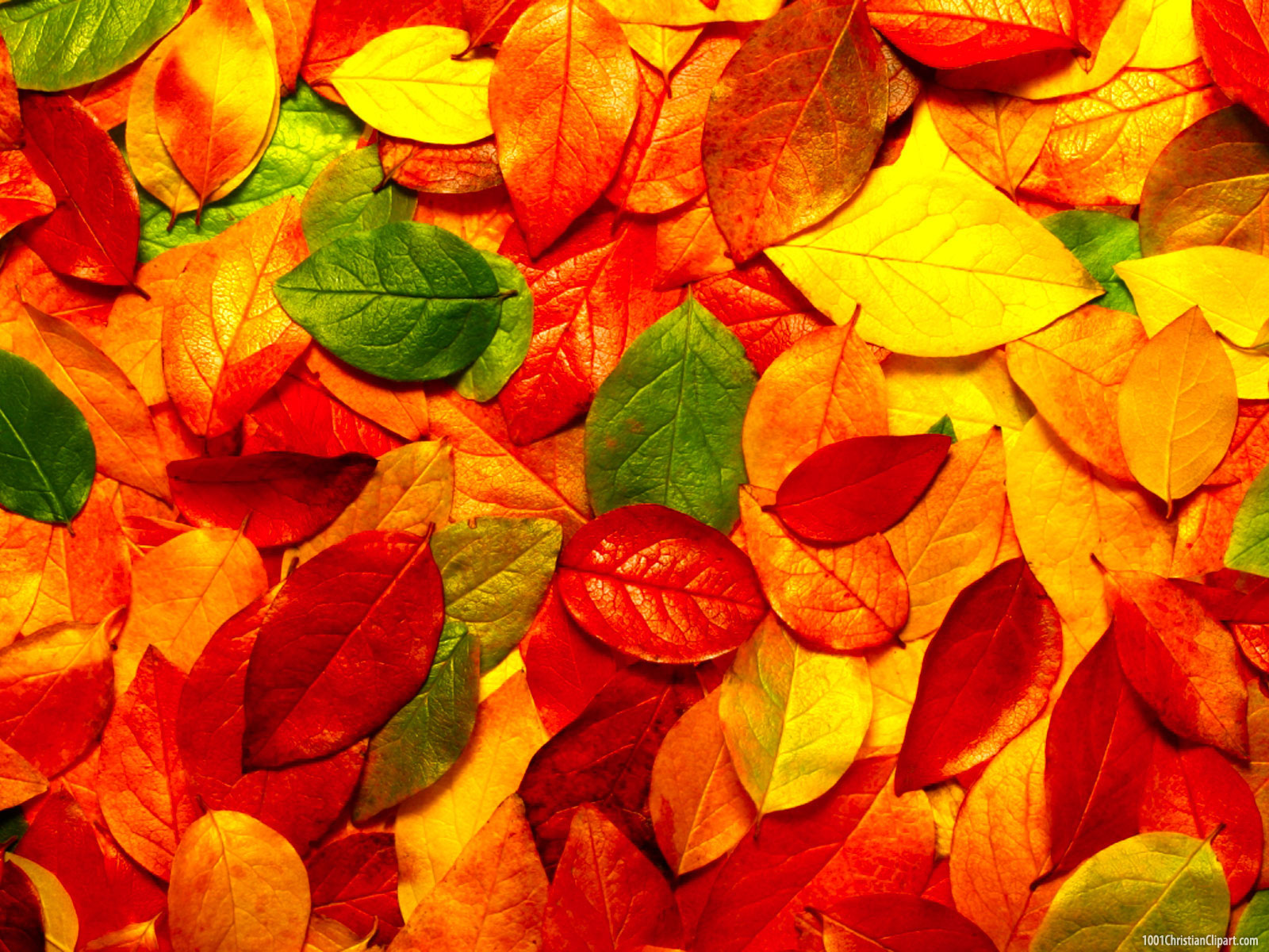 autumn-leaves-powerpoint-background