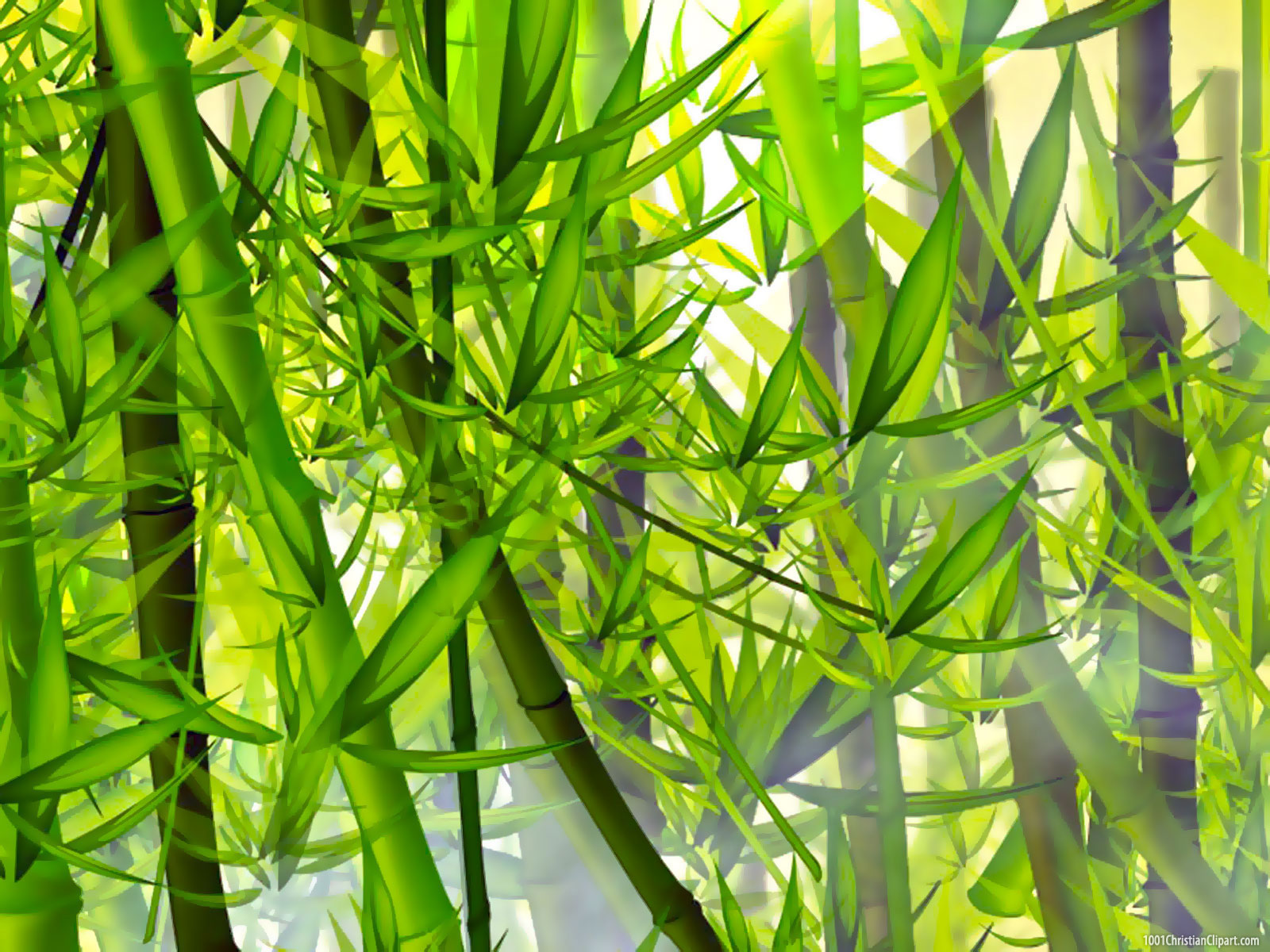 Bamboo HD Background