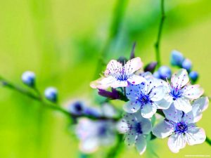 HDR Beautiful Flower Background