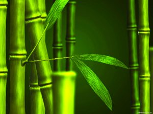 Bamboo Green Nature Background