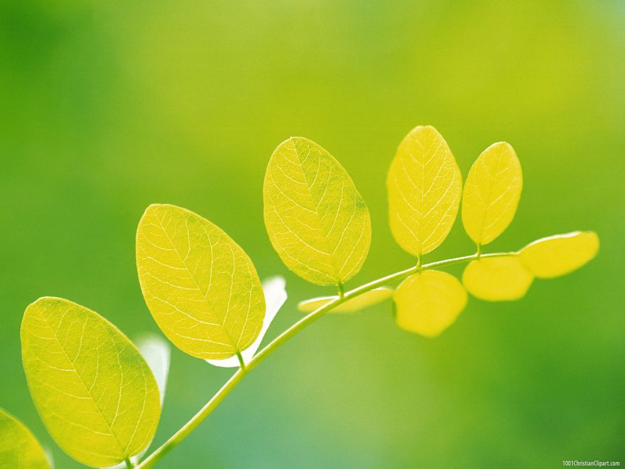 Beautiful Leaves Powerpoint Background