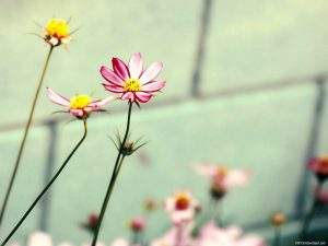 Flower HDR Background for Powerpoint